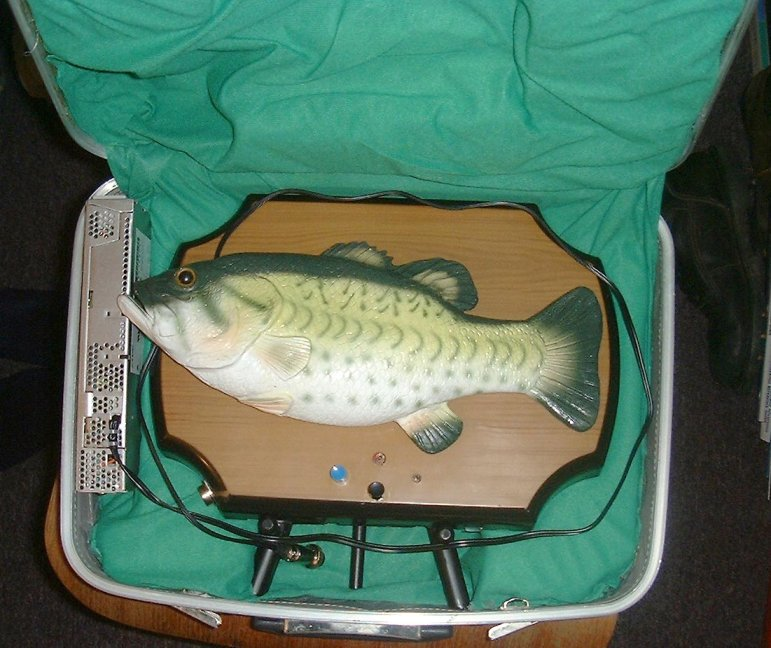 The fish inside the case